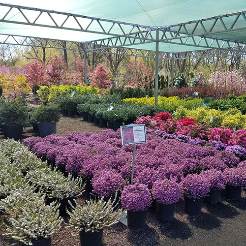 garden nursery center Prospectville